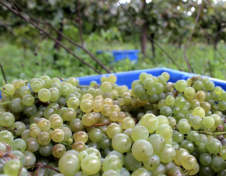 O que vai trazer 2019 para a agro-indústria em Portugal?